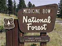 MEDICINE BOW FOREST