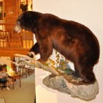 craig bear mount 2013